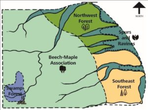 A map of the A.B. Williams Memorial Woods. It is divided into five color-coded regions: Northwest Forest; Spurs and Ravines; Southeast Forest; Beech-Maple Association; Swamp Forest.