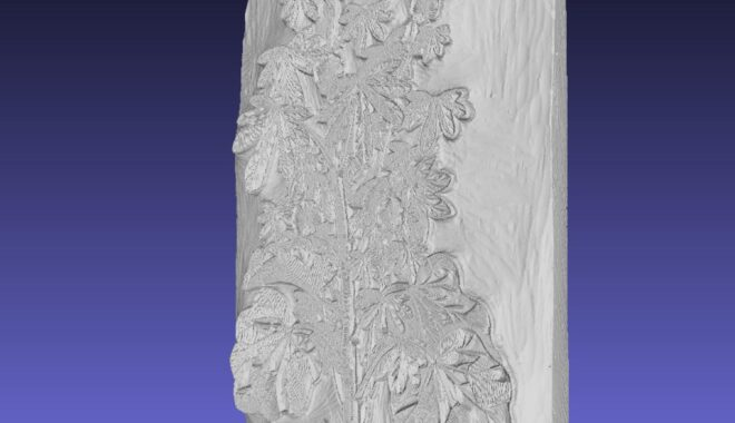 Side angle view of a 3D-scanned leafy plant woodblo