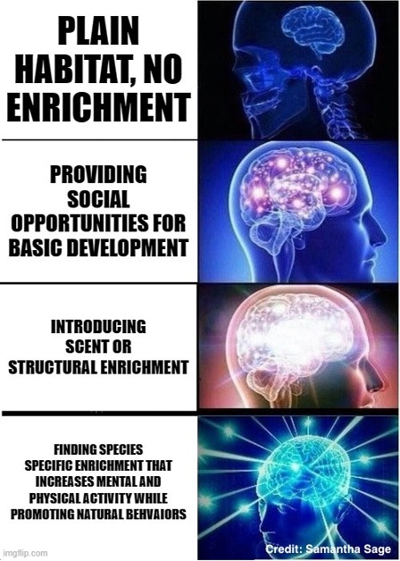 """An """"Expanding Brain meme"""" where four graphic images of human heads and brains are depicted. The brains vary in size, starting with small in the top right corner, and become progressively more intricate in design and color as they reach the bottom right image. Each image is associated with wording. The smallest brain image states """"plain habitat, no enrichment."""" The second smallest brain image states """"providing social opportunities for basic development."""" The second largest brain image states """"introducing scent or structural enrichment."""" While the largest brain image states """"finding species specific enrichment that increases mental and physical activity while promoting natural behaviors."""""""