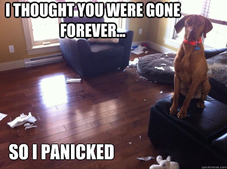 """An image of a brown dog in a red collar sitting on an ottoman. Throughout the living room scene pieces of papers are scattered and shredded. The text at the top reads """"I thought you were gone forever…"""" while the text at the bottom reads """"So I panicked"""""""